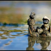 NZ wildlife gallery – Avon-Heathcote estuary_wm